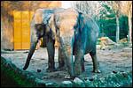 photo Les vieux éléphants