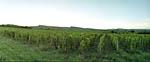 photo Les vignobles du Beaujolais